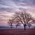 Morning Tree by Peter Shugart