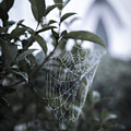 Morning Web With Dew by Alicia Collins