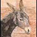 Moroccan Donkey by Laura Vazquez
