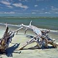 Morris Island Driftwood by Allen Beatty