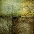 Mosaic - Mist And Trees by Patricia Strand