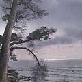 Moss Beach by Karen  W Meyer