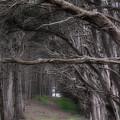 Moss Beach Trees 4191 by Karen  W Meyer