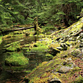 Moss By The Stream by Tracy Chappell