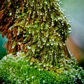 Moss by Christopher Holmes
