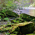 Moss Covered Boulders by Lowell Stevens