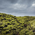 Moss Covered Lava Field by Michael Ver Sprill