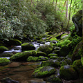 Moss Covered River Rocks by Pat Turner