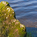 Moss Covered Rock And Ripples On The Water by Louise Heusinkveld