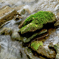 Moss Covered Rock by Wesley Farnsworth