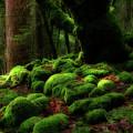 Moss Covered Rocks And Tree Yosemite Np California by Robert Dayton