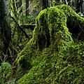 Moss Covered Tree Stump by Adam Jewell