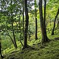 Moss Forest - Ginkakuji Temple - Japan by Daniel Hagerman
