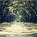 Moss Green Road by Carol Groenen