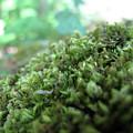 Moss I by Stefania Levi