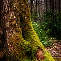Moss On A Tree by Greg Mimbs