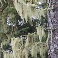 Moss On Pine by Hella Buchheim