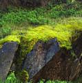 Moss On Rocks by Paula Joy Welter