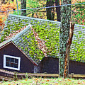Moss Roof by Beebe  Barksdale-Bruner