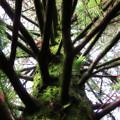 Moss Tree by Douglas Barnard