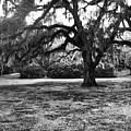 Moss Trees Black And White by Robin Lewis
