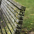 Mossy Bench by David Bearden