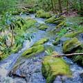 Mossy Blue Brook by Joshua Bales