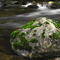 Mossy Boulder In Mountain Stream by John Stephens
