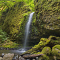 Mossy Grotto Falls In Summer by David Gn
