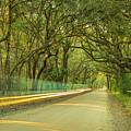 Mossy Oaks Canopy In South Carolina by Ranjay Mitra