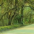 Mossy Oaks Canopy Panorama by Ranjay Mitra