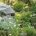 Mossy Path In Tahoe by Carol Groenen