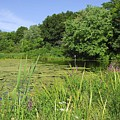 Mossy Pond by AnnaJanessa PhotoArt