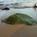 Mossy Rock by Pamela Walton