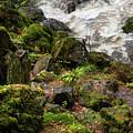 Mossy Rocks And Water Stream by Jenny Rainbow