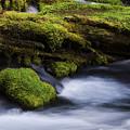 Mossy Rocks Oregon 3 by Bob Christopher