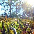 Mossy Sunburst by Zen WildKitty