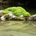 Mossy Turtle Rock by Sally Weigand