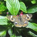 Moth 1 by Rich Bodane