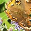 Moth 1 by Vijay Sharon Govender