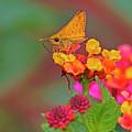 Moth #2 by Edita De Lima