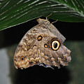 Moth 2 by Rich Bodane