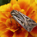 Moth And Marigold by Emily Kelley