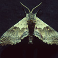 Moth At Texaco Station by Soli Deo Gloria Wilderness And Wildlife Photography