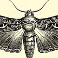 Moth by FL collection