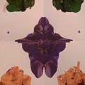 Moth by Jessica Baker
