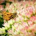 Moth On Joy by Jean Noren