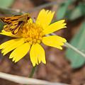Moth On Yellow  by Teresa Blanton