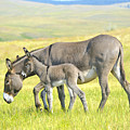 Mother And Baby Burro by Don and Bonnie Fink