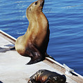Mother And Baby Sea Lion At Oceanside  by Tom Janca
